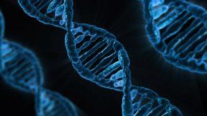 Regeneresen -Therapie mit biologisch aktiven Ribonucleinsäuren (RNA)