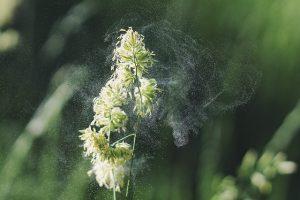 Frühlingsallergie - Biologische Kur zur unspezifischen Desensibilisierung